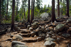 Rock Stair Steps on a Forest Trail Royalty Free Stock Photography