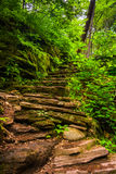 Rock staircase on a trail at Rickett's Glen State Park, Pennsylv Stock Photo