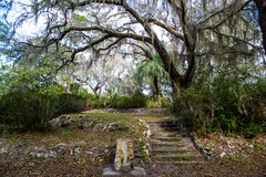 Rock stairs in a Southern garden. A Southern garden with trees, plants and stairs stock photography