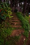 Rock Stairway in the forest for walk to hut with some plant on both side. Traveling in Thailand Pang Ung stock image