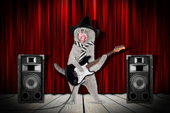 Rock star cat Stock Photography