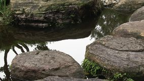 Rock stepping stones in the pond of a landscaped Japanese garden in Australia. stock video footage