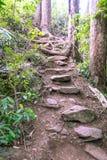 Rock steps on walking trail to Wairoa Stream Te Wairere in Ker stock image