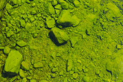 Rock stone cover with green moss algae under mineral water. Royalty Free Stock Photography