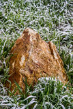 Rock stone in frozen grass Royalty Free Stock Photos