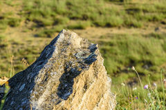 The rock Stock Images