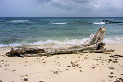 Rock stone and tree in  republica dominicana Royalty Free Stock Images