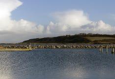 Harbour entrace landscape Royalty Free Stock Image