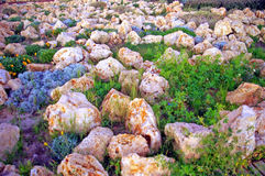 Rock stones and plants in the park garden in Cadiz capital, Andalusia. Spain Royalty Free Stock Photo