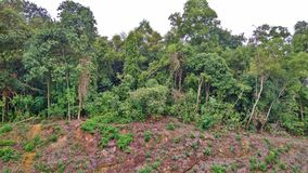 Rock strata - Singapore. Tilted or slanted layers of rock strata at a Bukit Batok forested hill in Singapore Stock Images