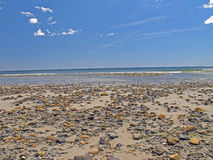 Rock strewn beach low tide Wells Maine Royalty Free Stock Image
