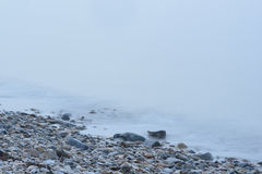 Rock strewn Coastal Maine Beach in heavy fog Stock Photo