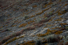 Rock structure moss surface grass Royalty Free Stock Photos