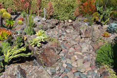 Rock and succulents landscaping. Backyard xeriscape landscaping consisting of larger rocks, succulents, and plants requiring little supplemental water from stock photography