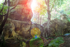 Rock in the sunlight in a summer wood thicket Stock Photos