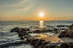 Rock sunset. Sunrise flying birds Royalty Free Stock Photo