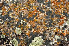 Rock surface with lichen and moss Stock Photos