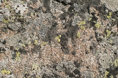 Rock surface with lichens Stock Images