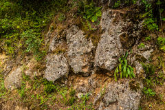 Rock Surface With Vegetation Stock Image