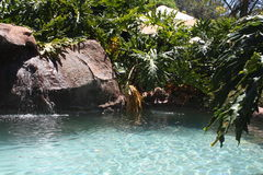 Rock swimming pool with bushes. This swimming pool has many rock features and is sorrounded by nature with plants and bushes with a closer view of the pool Stock Photo