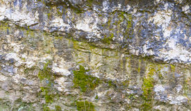Rock täckte med algtextur arkivfoton