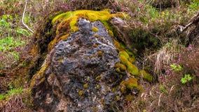 Rock täckte vid färgrik mossa arkivfoton