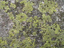 Rock Texture 1 Stock Images