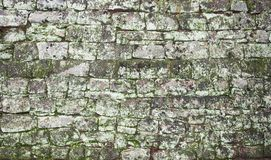 Rock texture. With  green moss Royalty Free Stock Photo