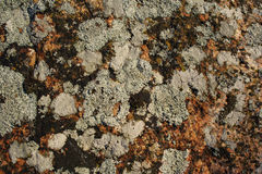 Rock texture. Rock with lichen Royalty Free Stock Photography