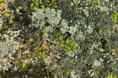 Rock texture with colorful lichens on surface mountain royalty free stock photography