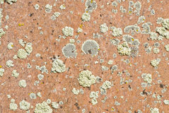 Rock Texture and Lichen Royalty Free Stock Photography