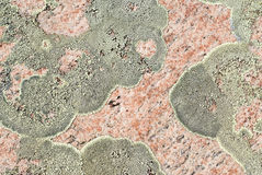 Rock Texture and Lichen Stock Images