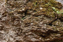 Rock textured stone. With lichen or moss on it outdoor shot Stock Images