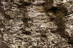 Rock textured stone. With lichen or moss on it outdoor shot Stock Photography