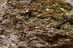 Rock texturerade stenen Arkivbilder