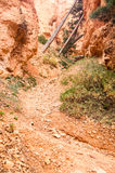 Rock trail with trees in Bryce Canyon Stock Images