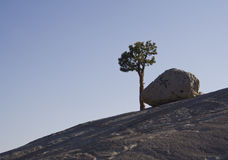 Rock and tree Royalty Free Stock Images
