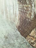 Rock tree Stock Photos