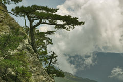 The rock tree Royalty Free Stock Images