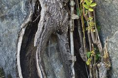 Rock and tree in autumn Stock Photography