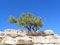 Rock Tree Royalty Free Stock Photography