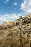 Rock tree Royalty Free Stock Photography