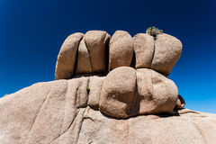 Rock at Joshua Tree National Park Stock Images