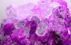 Rock with valuable fucsia mineral just found by geologist Royalty Free Stock Photo