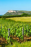 The Rock Of Vergisson and wine yard's, Burgundy, France Stock Photos