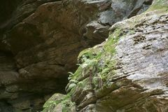Rock wall detail, Ash Cave, Ohio stock photography