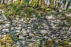Rock wall with ferns and moss royalty free stock images