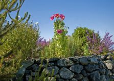 Rock Wall Garden Scene. This rock wall is the stage for a beautiful floral garden scene with trees and blue sky Stock Photos