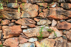 Rock wall green plant larger Royalty Free Stock Photography