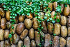 Rock wall with plant Stock Images